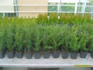 Herzlich willkommen pflanzenversand tessi evelyne b nig for Gartenabgrenzungen mit pflanzen